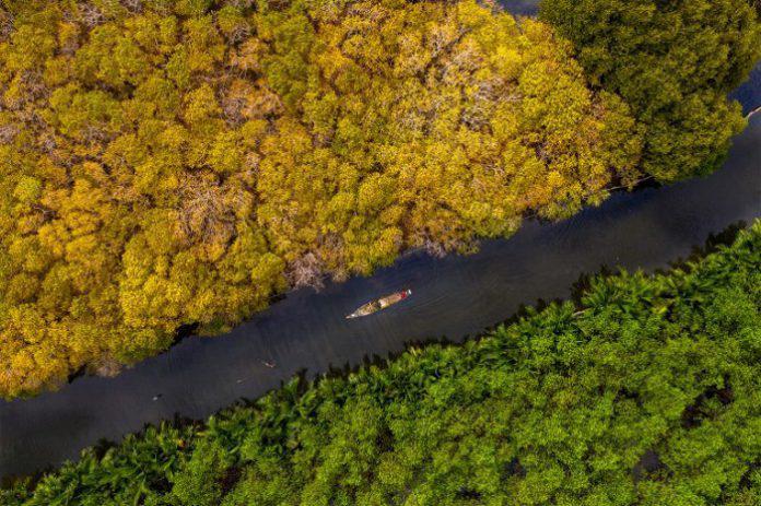 Rừng ngập mặn Rú Chá- điểm đến độc đáo của vùng đất Cố Đô